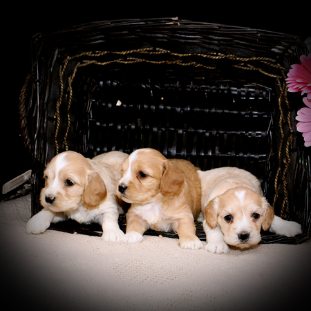 3 Cute Little Girls!