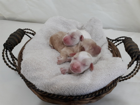 Beautiful puppies ~ Oct 28