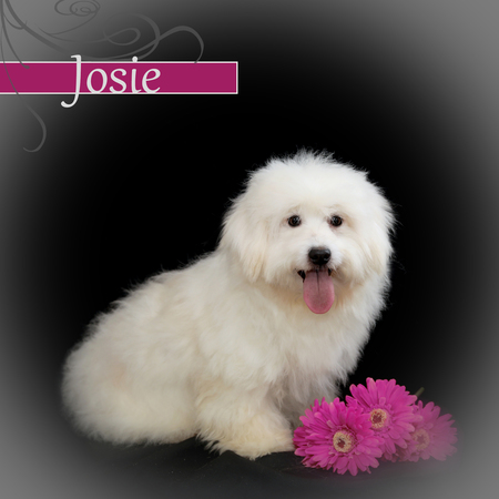Josie ~ an Upbeat and Cheerfully Sunny Girl!