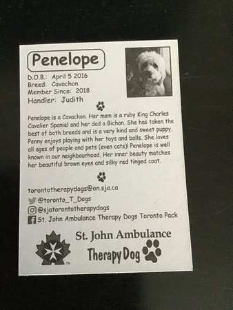 Penelope:  Our Therapy Dog!