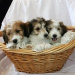 Three Adorable Brothers!