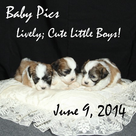 Three Little Teddy Bears