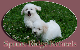 Spruce Ridge Kennels Logo